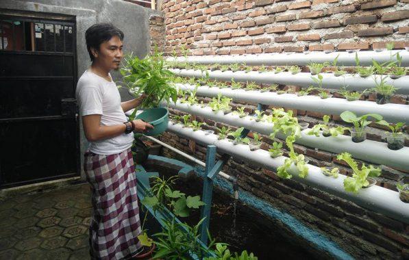 Budidaya Sayuran Teknis Akuaponik
